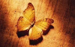 Sfondi desktop HD animali farfalla  - immagini HD