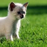 Sfondi desktop HD animali - gattino curioso