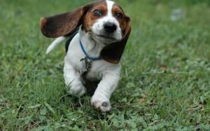 Sfondi desktop HD cane