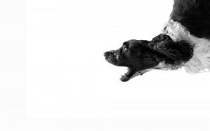 Sfondi desktop HD cane simpatico