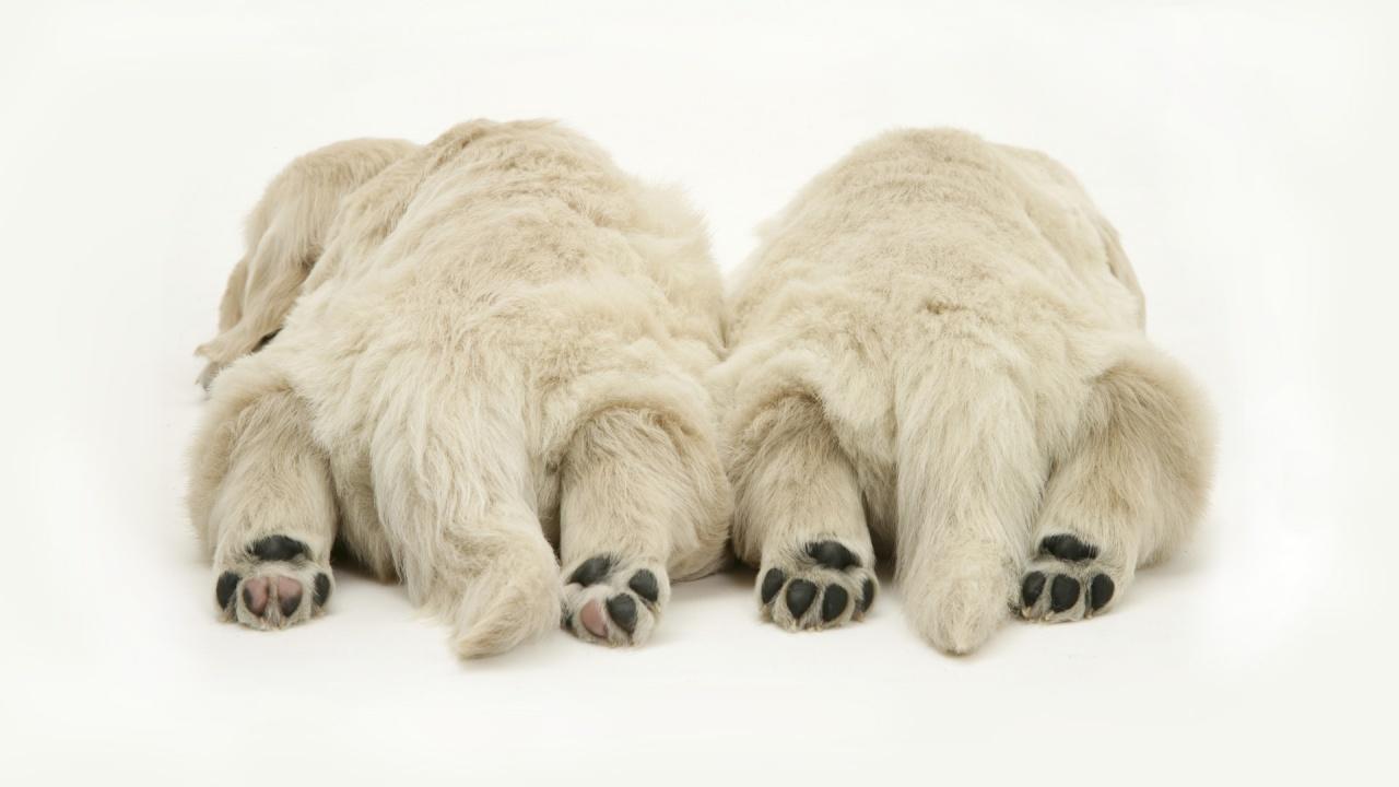 Sfondi desktop hd cani dormiglioni sfondi hd gratis for Sfondi animali hd