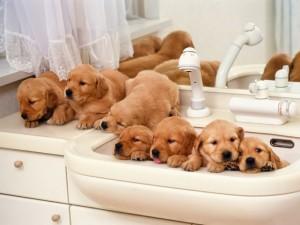 Sfondi desktop HD cuccioli in bagno