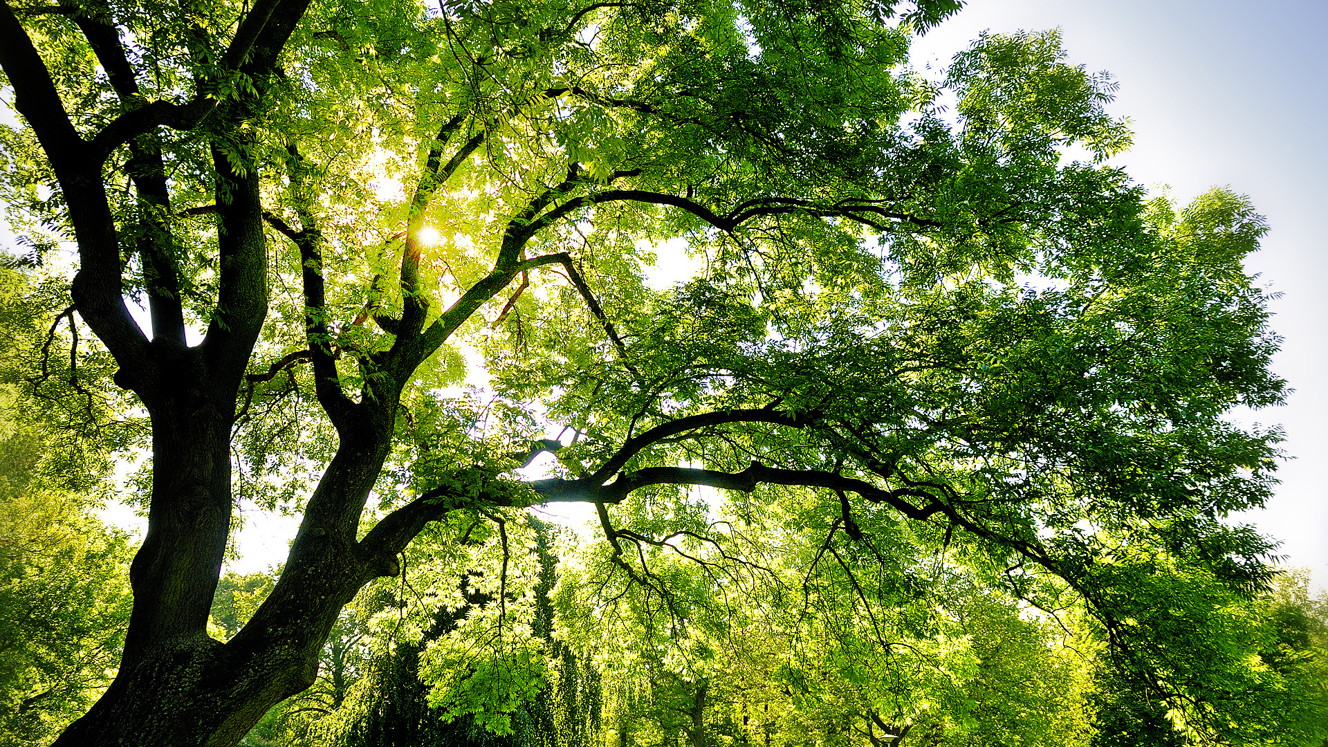 Sfondi desktop paesaggi hd albero secolare sfondi hd for Desktop paesaggi