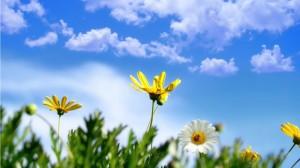 Sfondi di primavera per desktop
