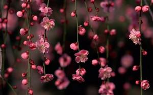 Sfondi primavera HD , fiori di pesco