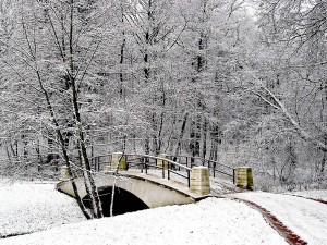 Sfondi desktop HD Natale 2013 - foresta innevata