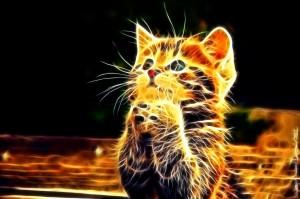 Sfondi 3D per desktop - immagini gattino