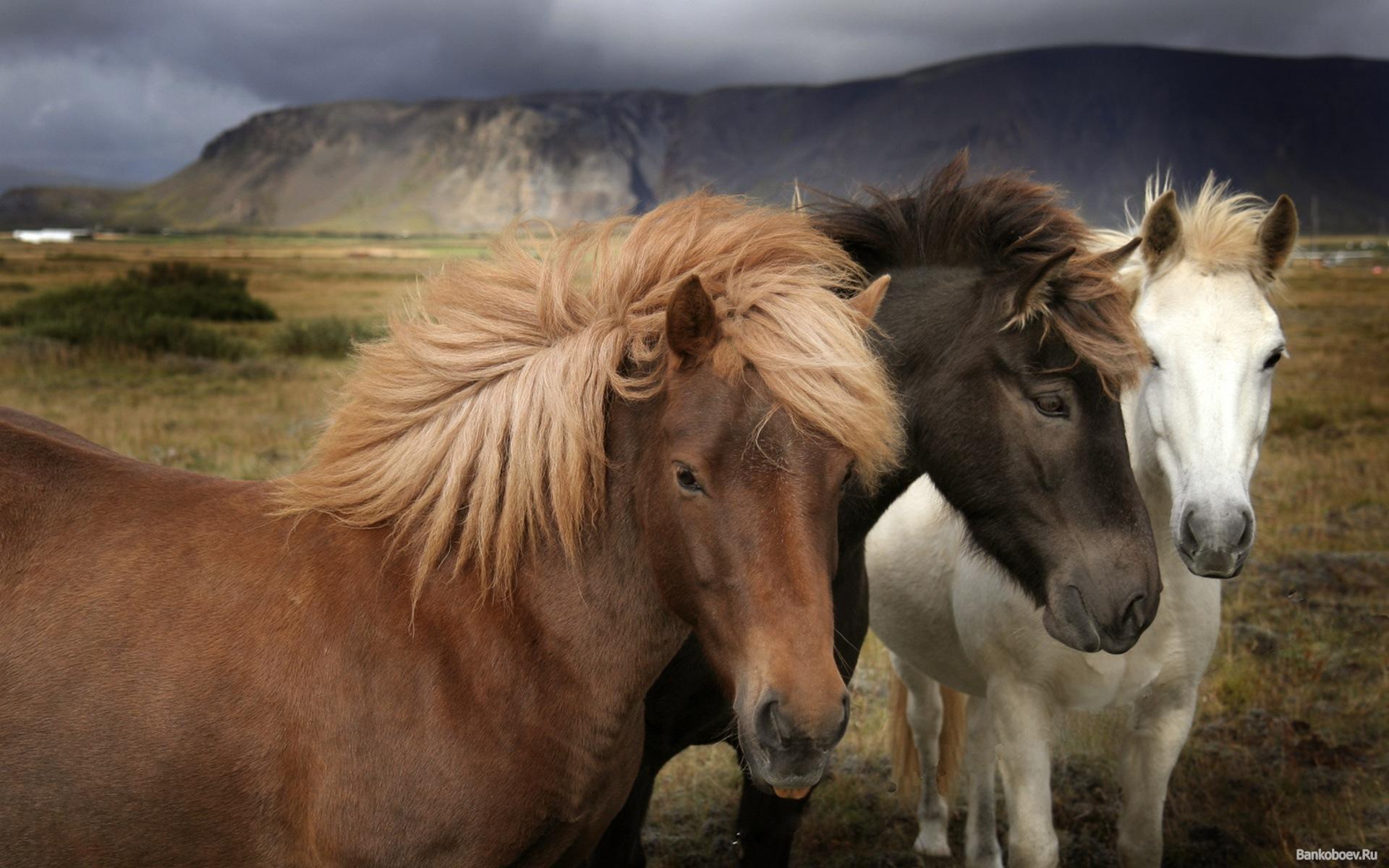 Sfondi desktop hd animali cavalli sfondi hd gratis for Sfondi cavalli gratis