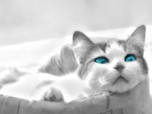Sfondi desktop HD gatto bellissimo