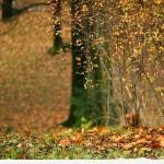 Sfondi HD natura per desktop - autunno