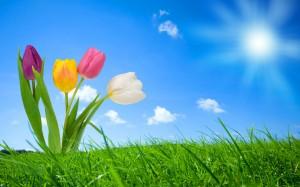 Sfondi HD natura per desktop - tulipani in primavera