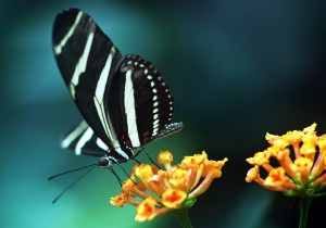 Sfondi farfalla per desktop - animali belli