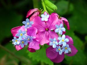 Sfondi primavera HD - fiorellini