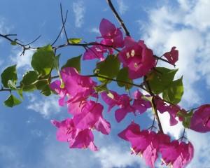 Sfondi primavera HD - fiori rosa