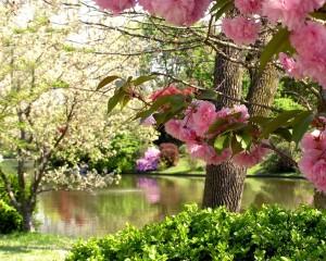 Sfondi primavera HD - natura