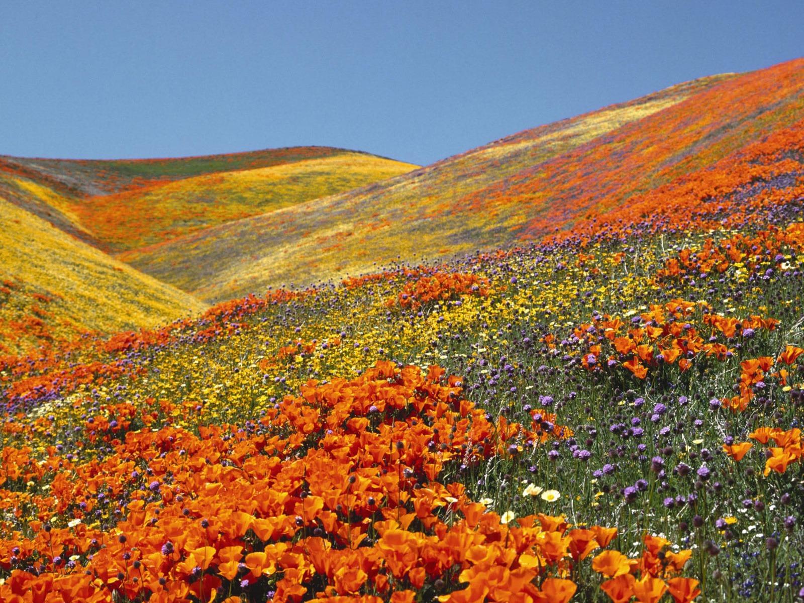 Sfondi primavera per desktop campo fiorito sfondi hd for Immagini gratis per desktop primavera