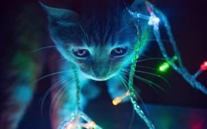 Sfondi HD - gatto con luci