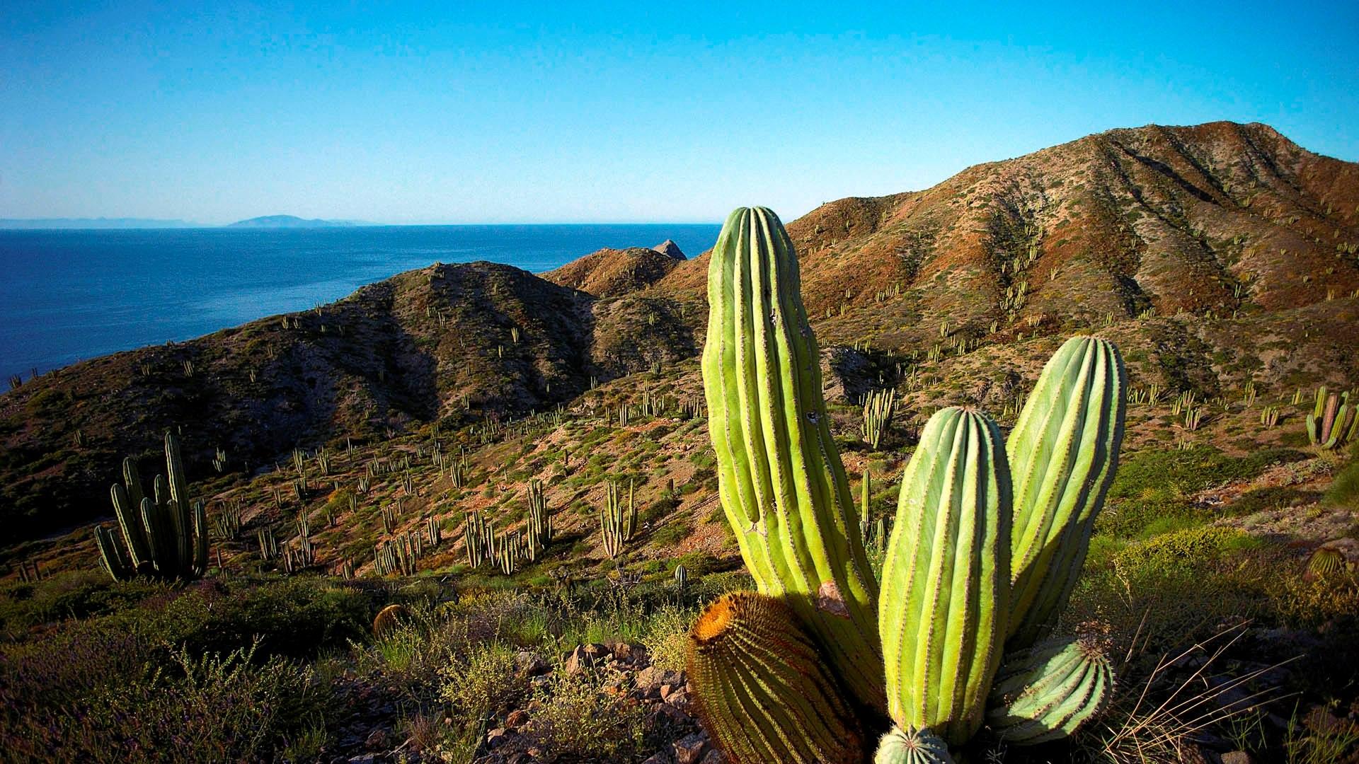 Sfondi hd natura deserto e cactus sfondi hd gratis for Immagini hd gratis