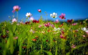 Sfondi HD natura - fiori di primavera