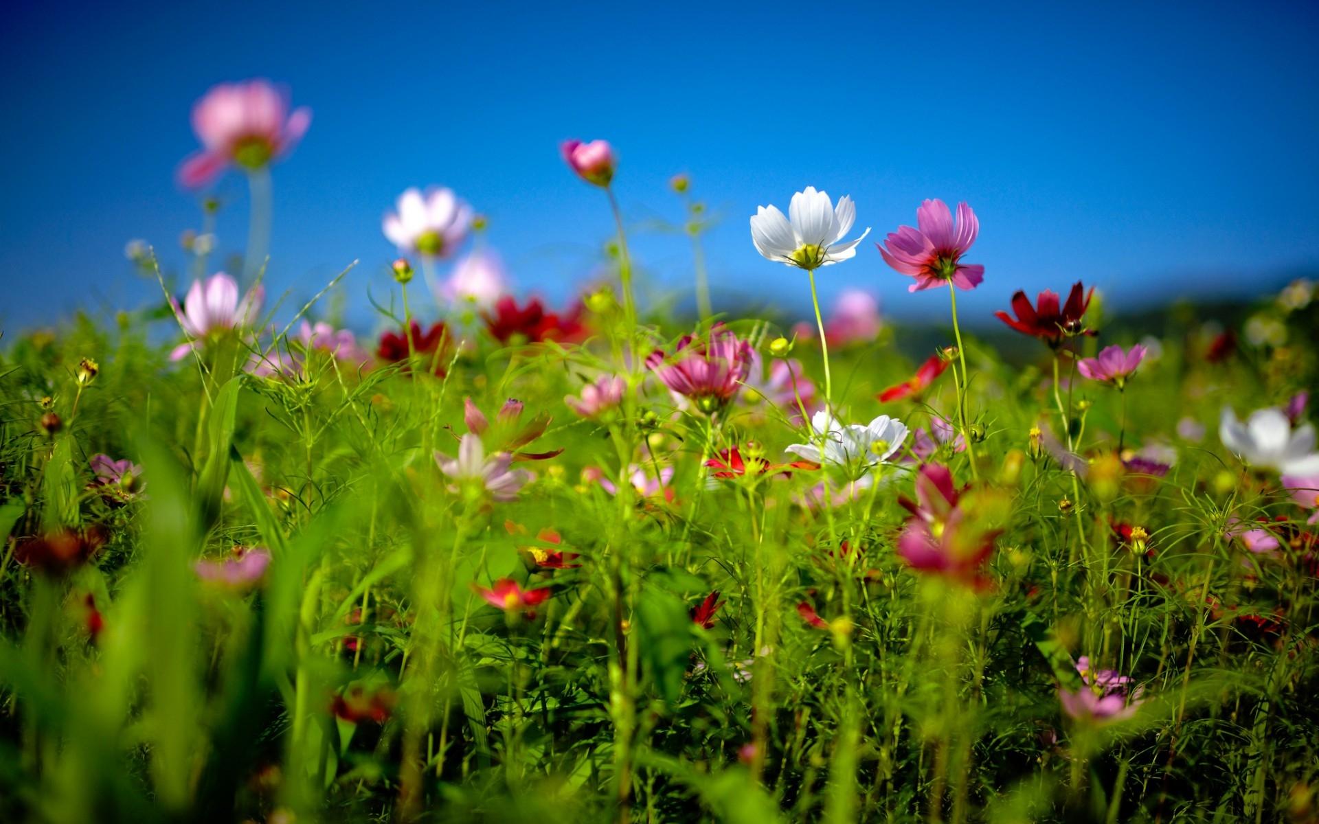 Sfondi hd natura fiori di primavera sfondi hd gratis for Sfondi hd natura