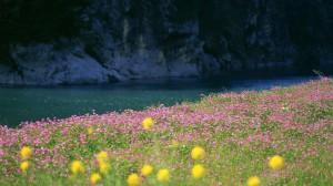 Sfondi HD natura - fiume e fiori