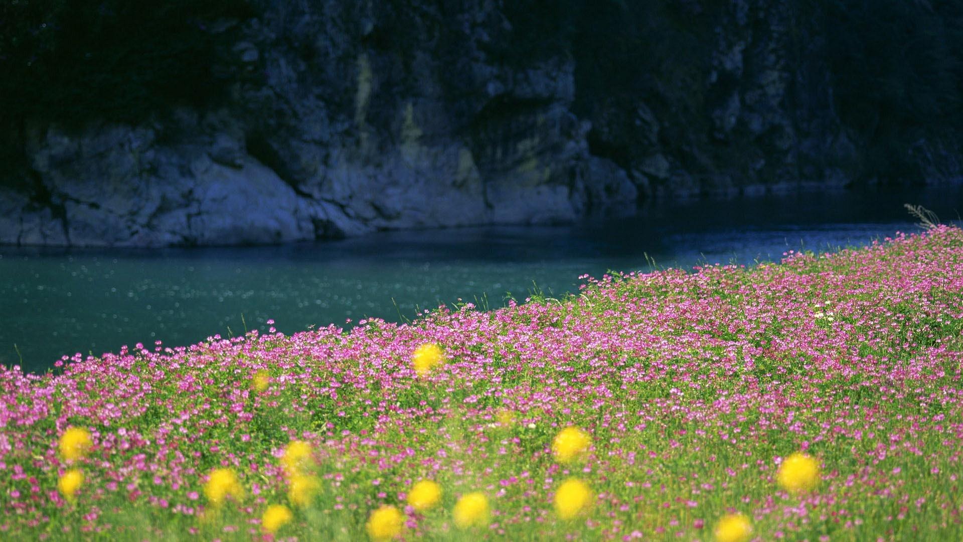 Sfondi hd natura fiume e fiori sfondi hd gratis for Sfondi hd natura