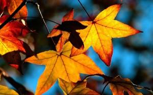 Sfondi HD natura - foglie