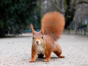 Sfondo HD scoiattolo simpatico