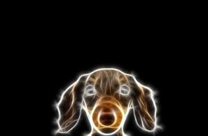 Sfondi animali frattali HD - cane