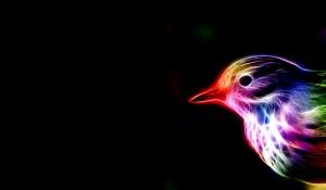 Sfondi animali frattali HD - uccello