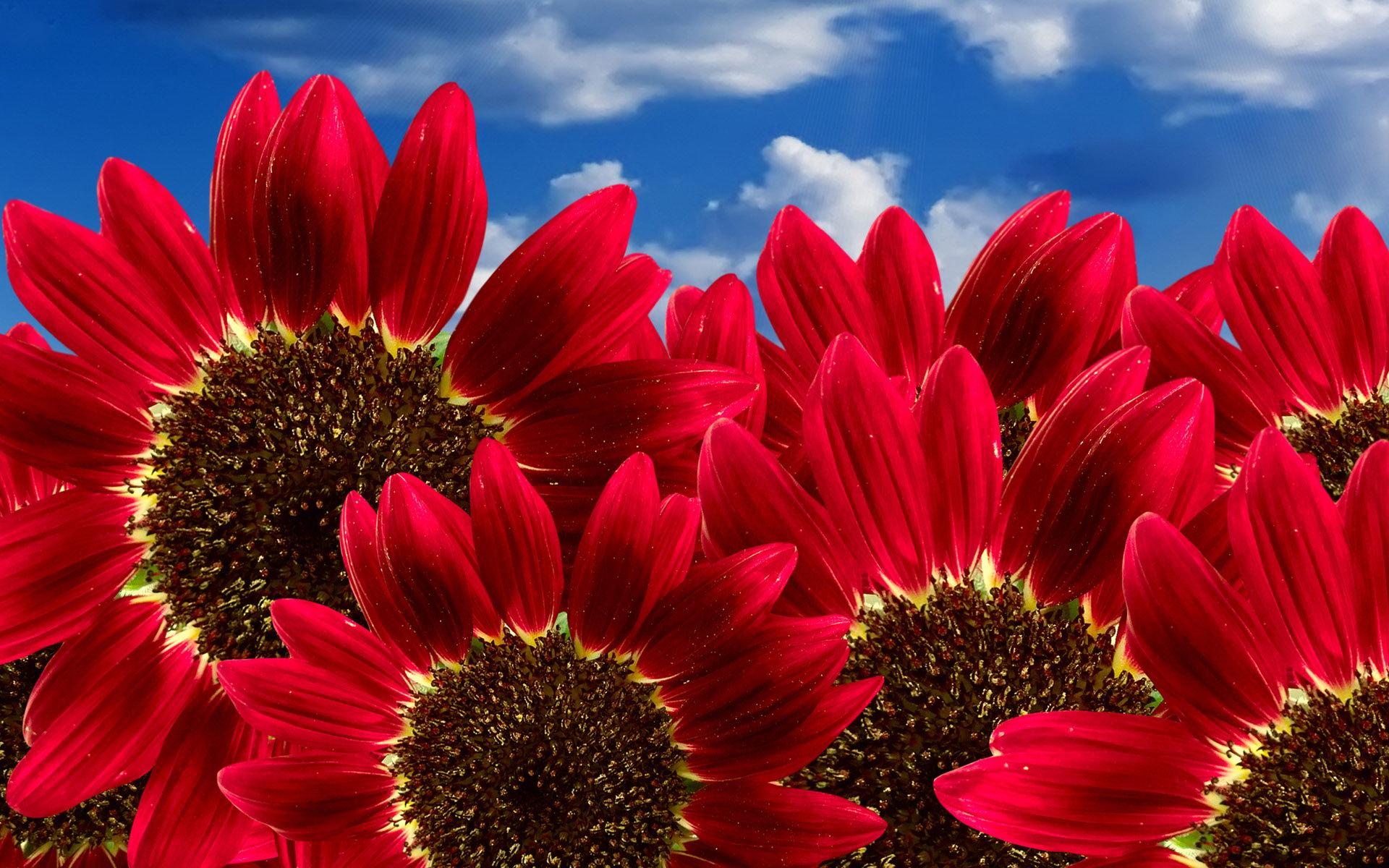 Sfondi desktop windows 10 fiori