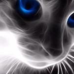 Sfondi HD gatto fractale