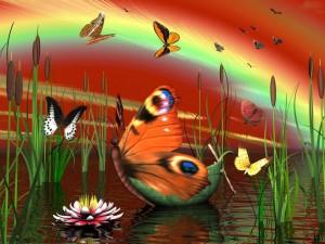 Sfondi desktop farfalle HD