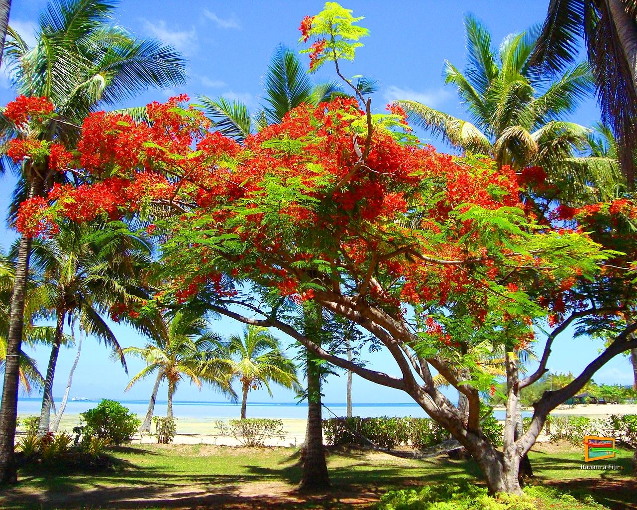 Desktop gratis hd spiaggia e mare paesaggi sfondi for Desktop gratis mare