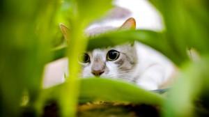 Sfondi full HD gatto