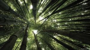 Sfondo-HD-foresta-naturale