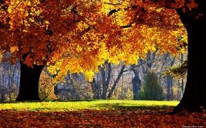 Sfondo HD natura - autunno