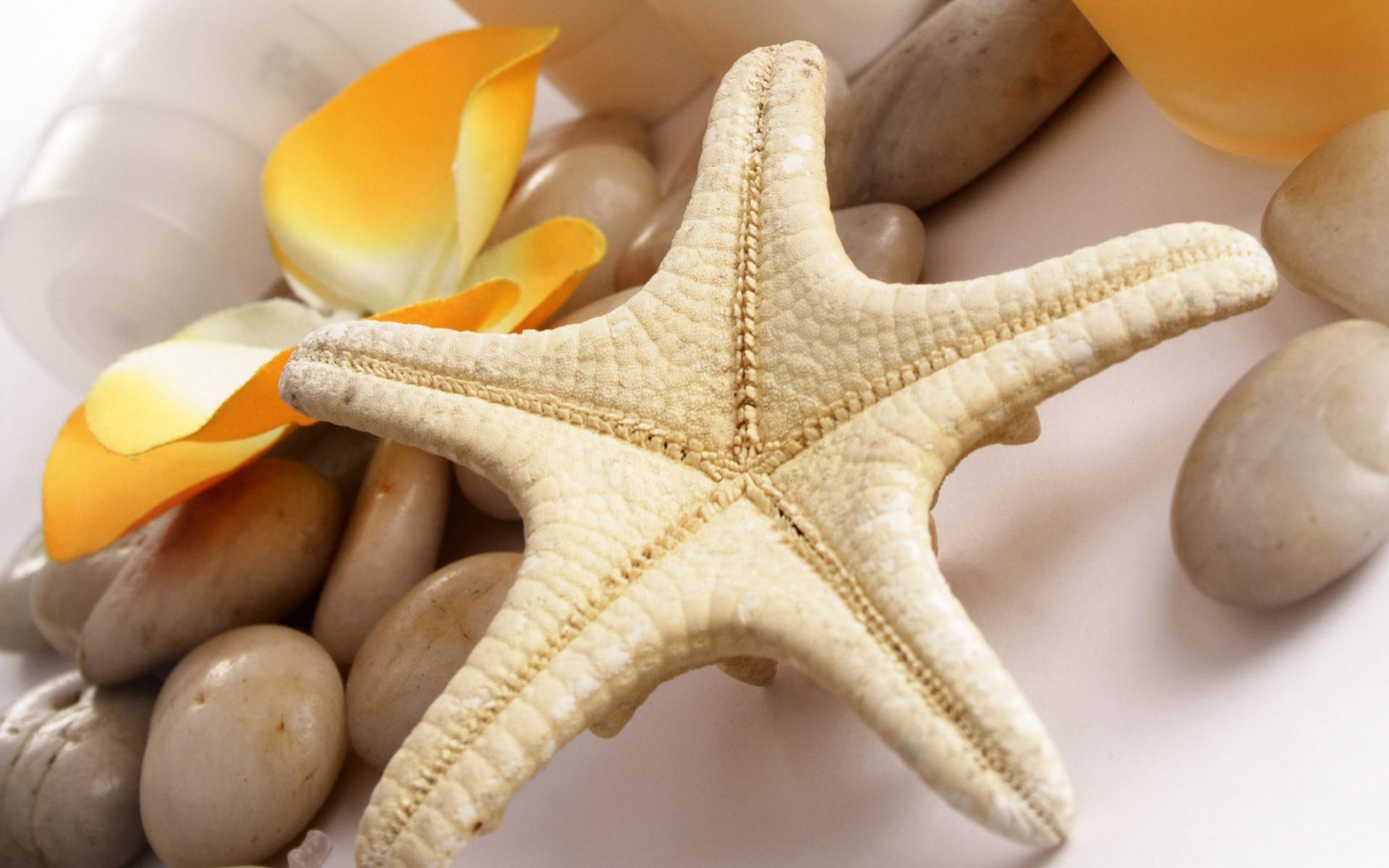 Sfondi hd bellissimi animali stella marina sfondi hd for Sfondi animali hd