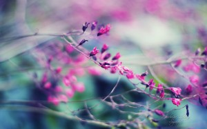 Sfondi HD bellissimi - fiore viola