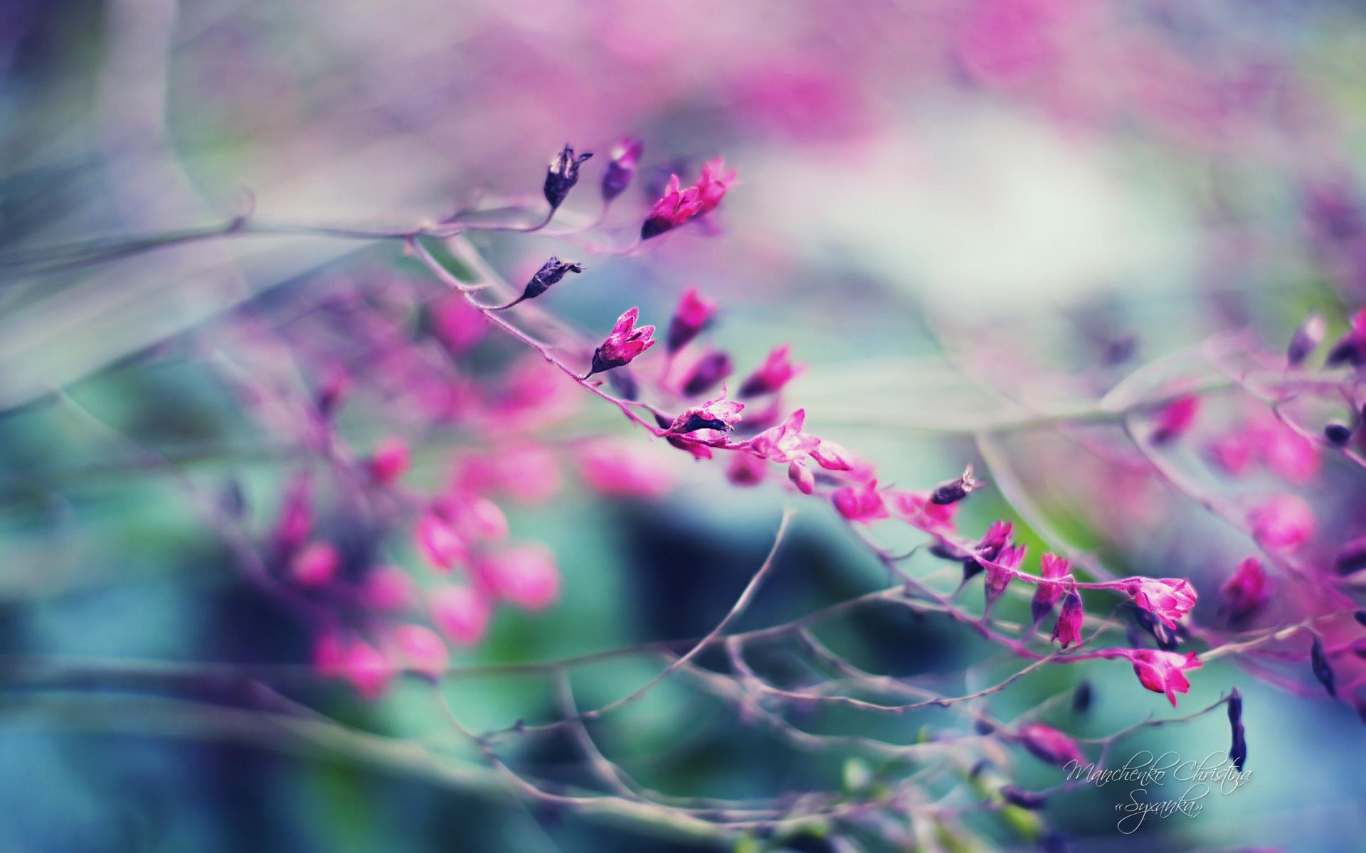 Sfondi hd bellissimi fiore viola sfondi hd gratis for Immagini 3d hd
