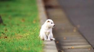 Sfondo HD cane