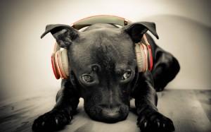 Sfondo HD cane nero simpatico