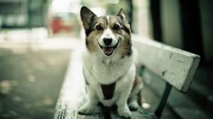 Sfondo HD cane sulla panchina