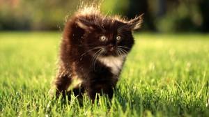 Sfondi HD gatto tenerissimo