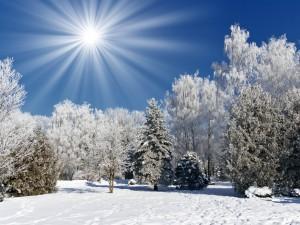 Sfondo HD inverno e natura