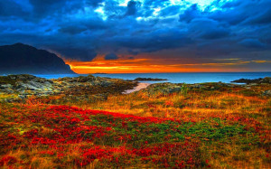 Sfondo HD paesaggio bellissimo prato fiorito