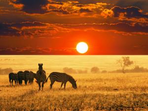 Sfondo HD paesaggio bellissimo savana e zebre