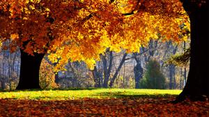 Sfondi HD natura bosco in autunno
