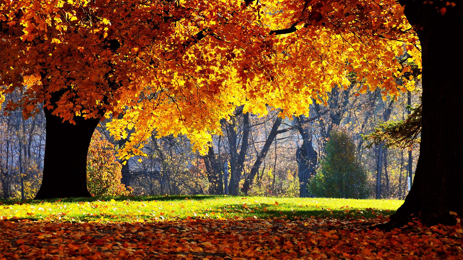 Sfondi hd natura bosco in autunno sfondi hd gratis for Sfondi autunno hd