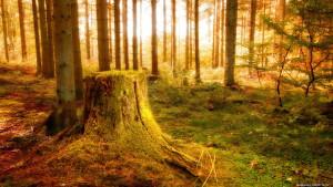 Sfondi HD natura foresta